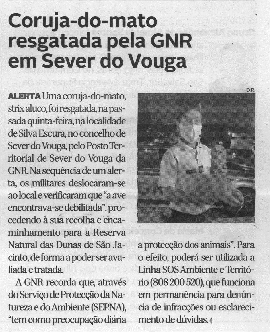 DA-29jun.'21-p.7-Coruja-do-mato resgatada pela GNR em Sever do Vouga.jpg