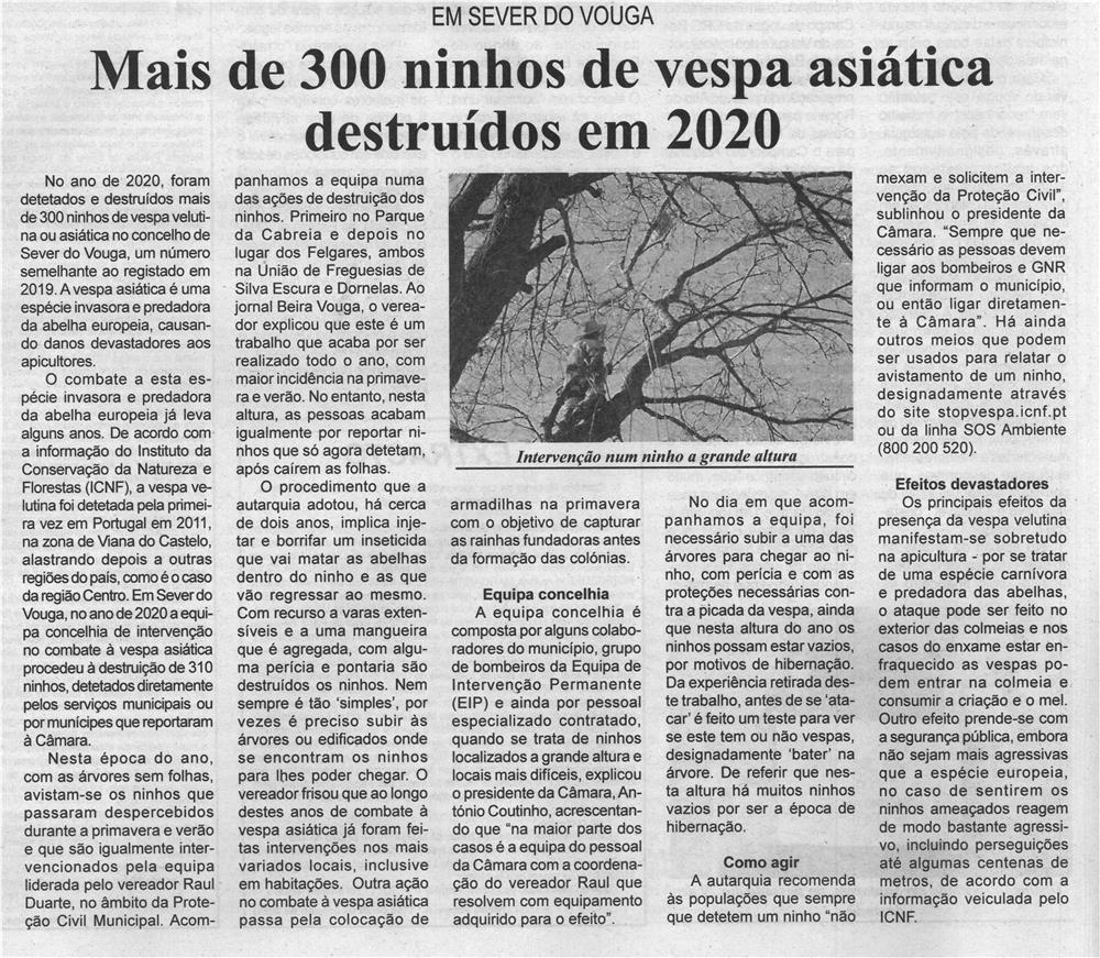 BV-2.ªjan.'21-p.4-Mais de 300 ninhos de vespa asiática destruídos em 2020 : em Sever do Vouga.jpg