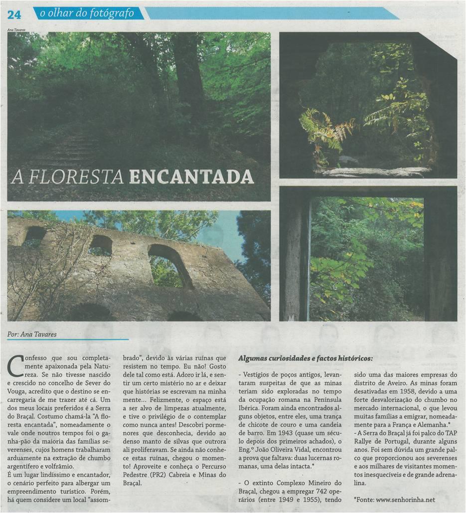 EV-fev'15-p24-A floresta encantada : o olhar do fotógrafo.jpg